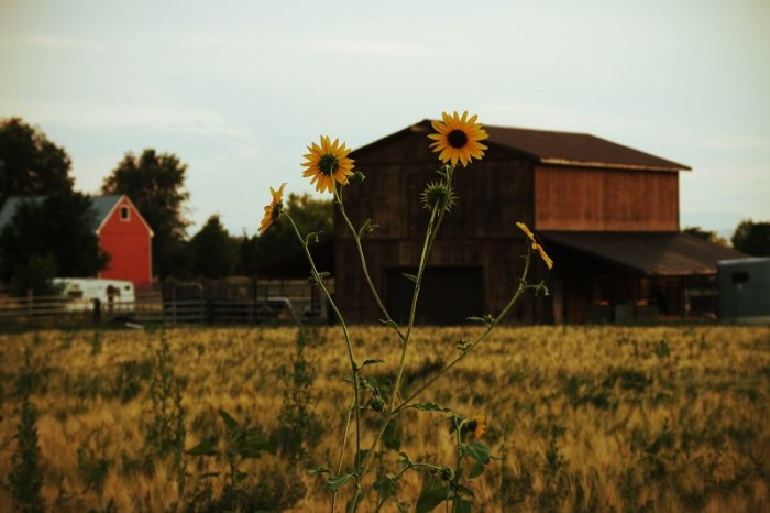 16. Photography opportunities like this one in Mapleton exist in your own backyard.