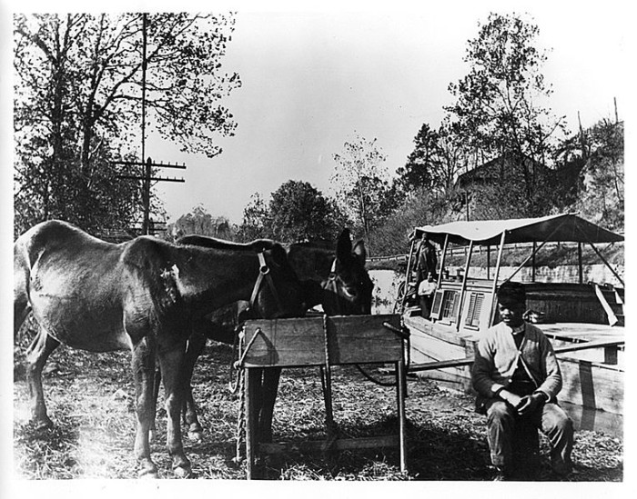 15. Mules being fed at the C & O Canal, in the mid 1800s.