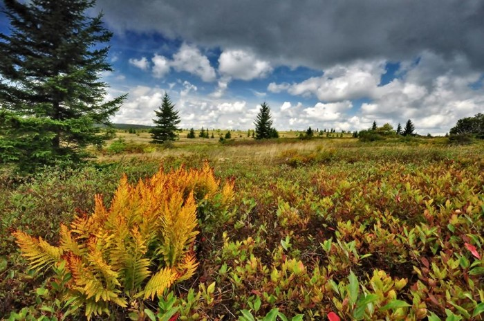 10. This shot of Dolly Sods.