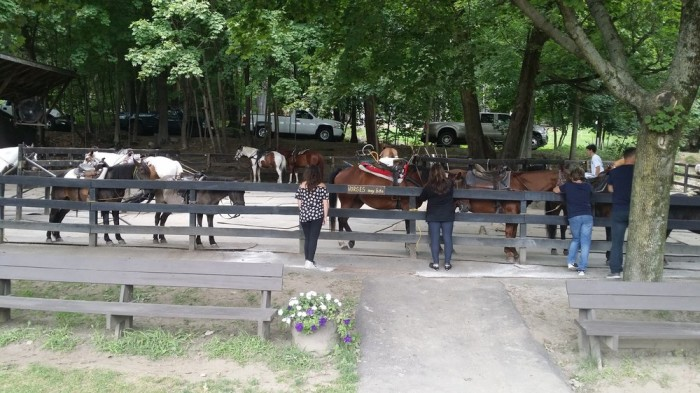 Whether it be a horse-drawn carriage ride or some horseback riding, you can get your fill of horses in Lake George!