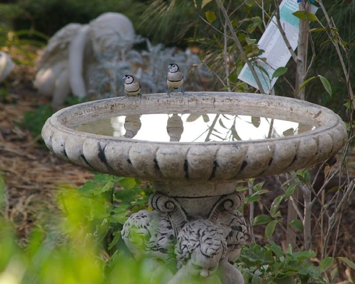 9. In Wynona, clothes may not be washed in a bird bath.