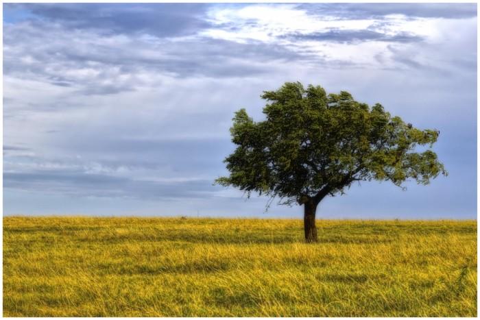 1. This lonely tree sits amongst a withering field.