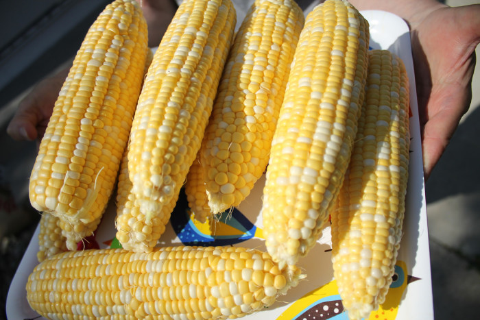 12. You know the difference between sweet corn and field corn...while it's still on the stalk.