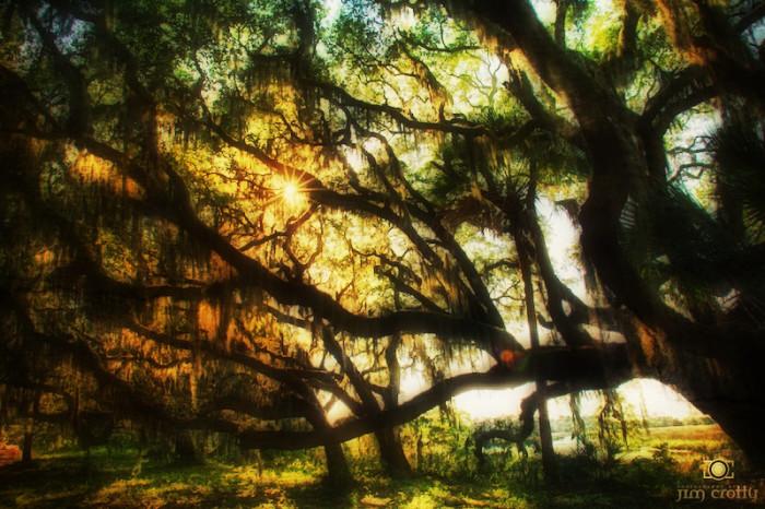 old-oak-botany-bay