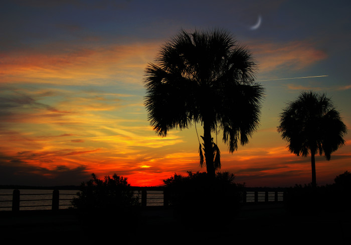 1. A palmetto with a crescent moon as seen from White Point Gardens along Charleston's Battery.