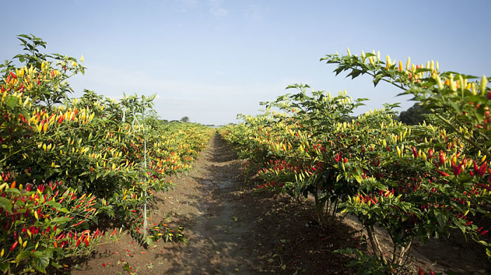 Walk around the beautiful grounds where the peppers are grown.