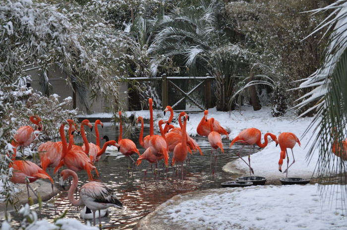 7. Riverbanks Zoo and Garden - Columbia, SC