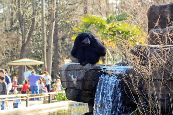 Monkey enclosure, Riverbanks Zoo - Columbia, SC