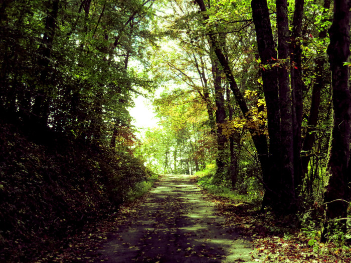 15. This beautiful tree-lined path in Sophia.
