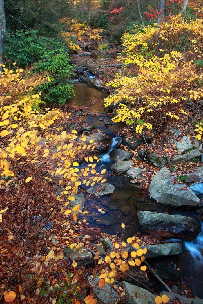 7. This stream in a West Virginia forest.