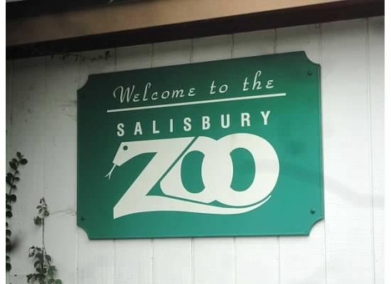 4) Visit the animals at the Salisbury Zoo.