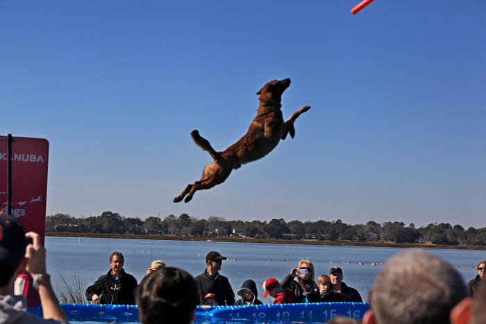 In Charleston, pick your spot poolside on Valentine's Day for the Southeastern Wildlife Expo's Dock Dogs competition at Brittlebank Park. You'll have the beautiful Ashley River as your backdrop. More info