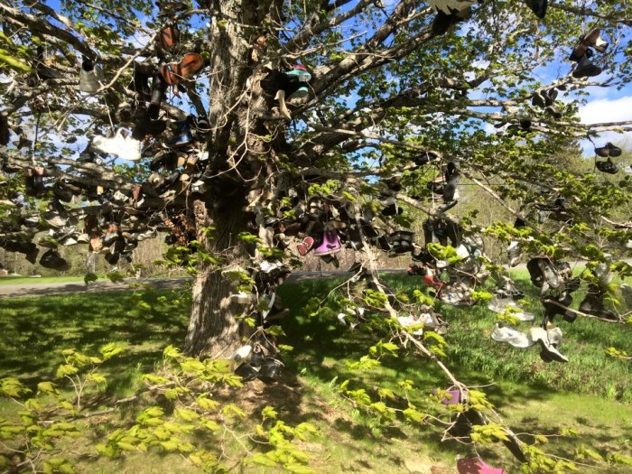8. The Shoe Tree, Hodgdon