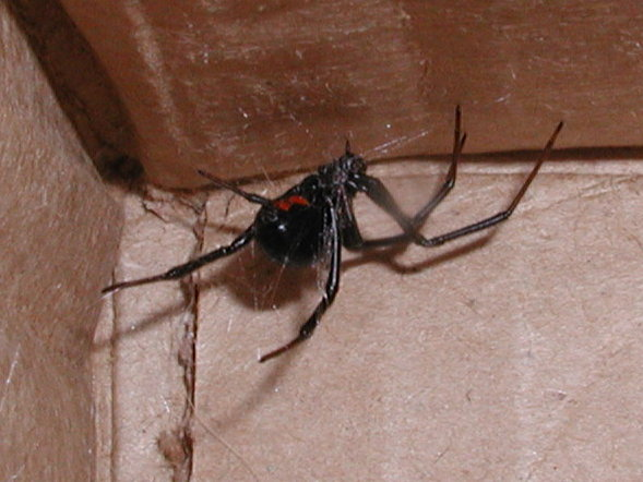 5. Spiders