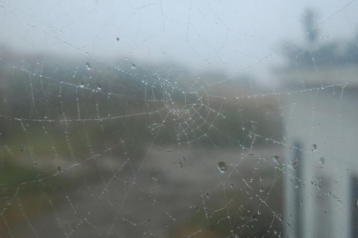 12. Spiders' webs are always beautiful yet spooky.