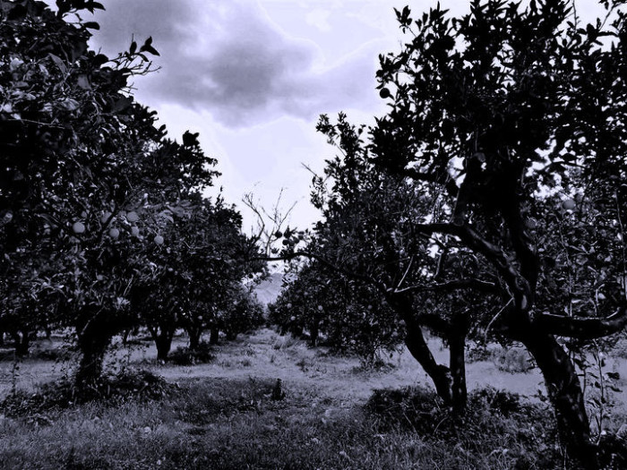 Legend has it that the attraction started at a run of the mill haunted house called Farmer Grave's Haunted Orchard.