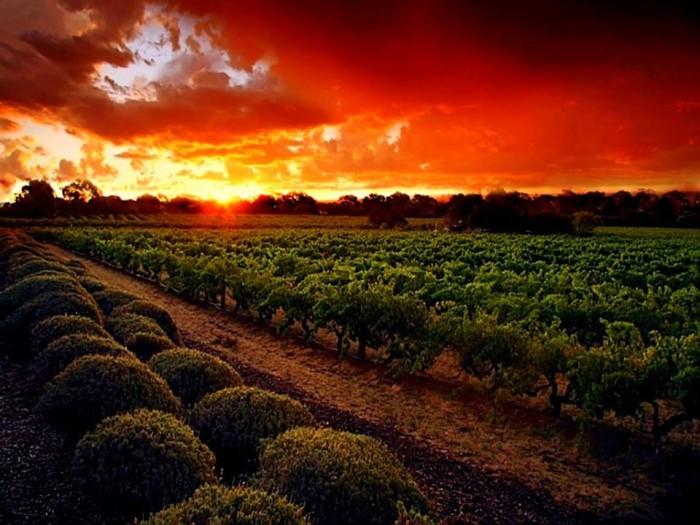 8. Take a vineyard tour