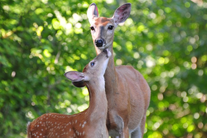 The wildlife here will drop your jaw and melt your heart!