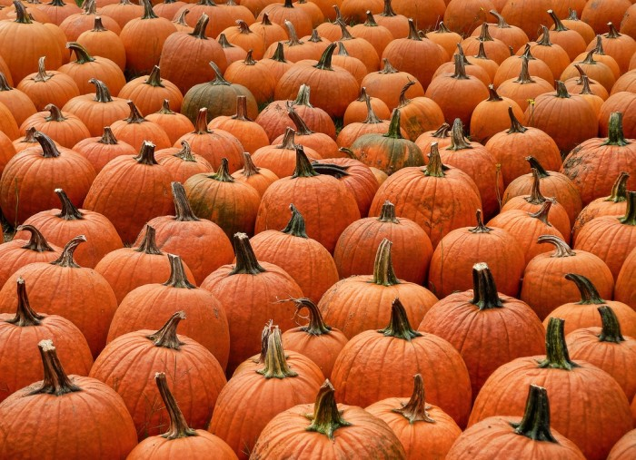4. We produce the most pumpkins in the country.