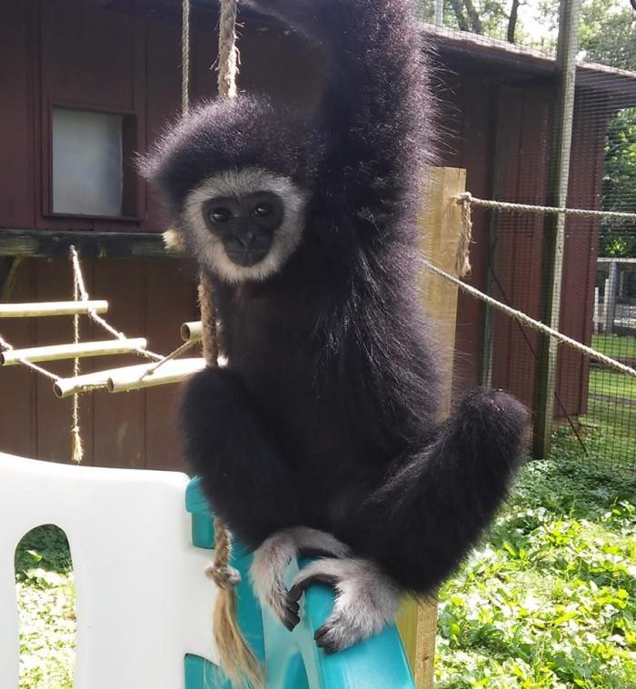 5. Enjoy the Henson Robinson Zoo.