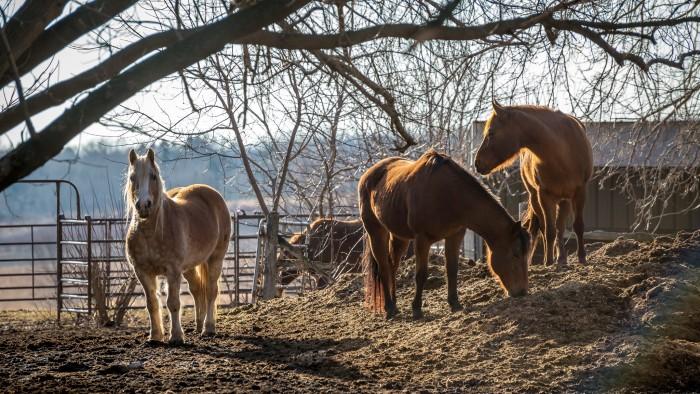 9. These horses are enjoying themselves in Washington.