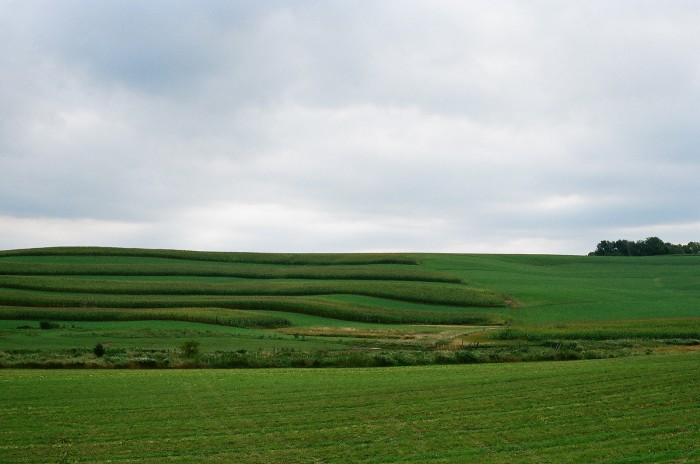 14. Looks like these fields go on for as far as the eye can see.