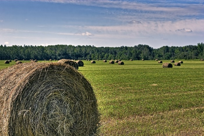 16. Don't these bales of hay look great?