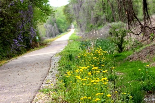 1. The Tanglefoot Trail, Houston to New Albany