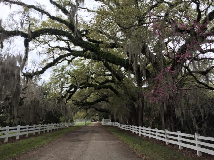 To get to Rosedown Plantation, follow US 61 north to La 10. The address is 12501 Highway 10, St. Francisville.