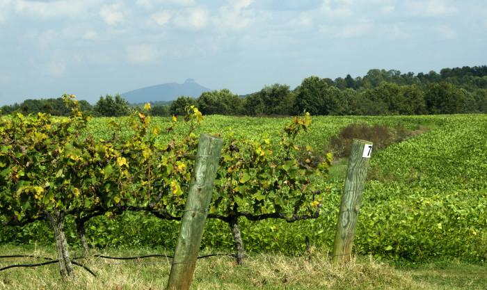 6. Visiting a beautiful vineyard or winery along Yadkin Valley.