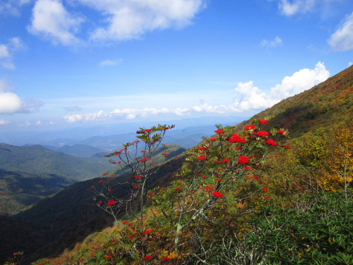 7. Catch the rhododendron blooms at Craggy Gardens.