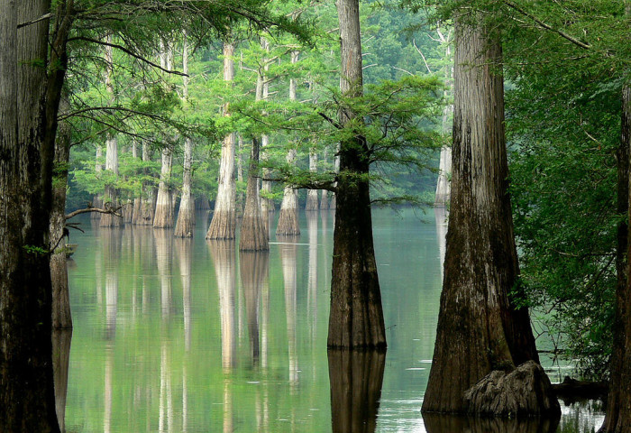 13. White River: White river is another popular destination for float trips. Check out how awesome these trees are too though: