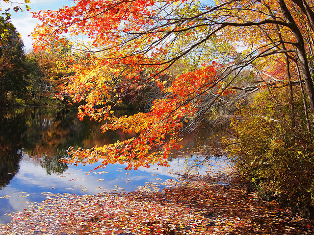 8. Autumn leaves scattered on the surface of a lake in Pascoag is a magical site.