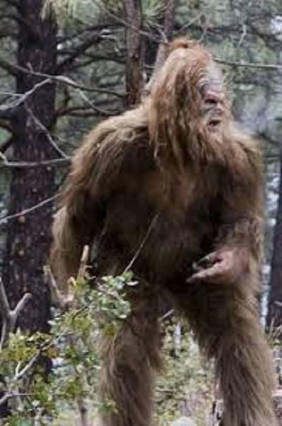11. Bigfoot Sightings