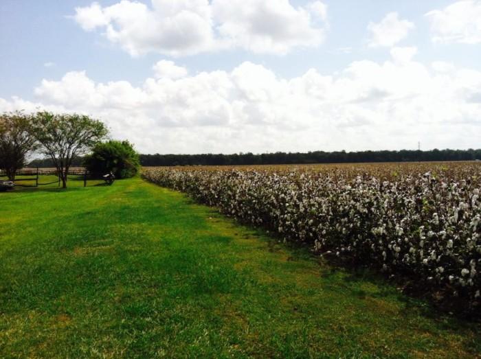 4. Frogmore Cotton Plantation, Ferriday, LA