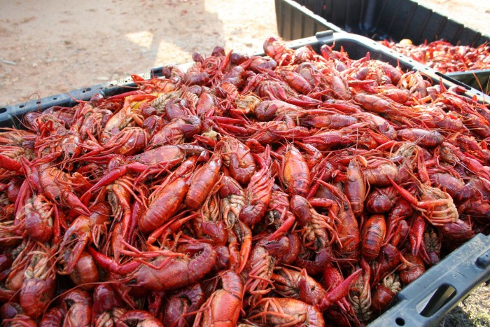 11. Spend an afternoon at a crawfish or shrimp boil.