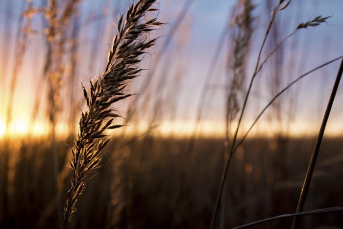 1. Fields of wheat...