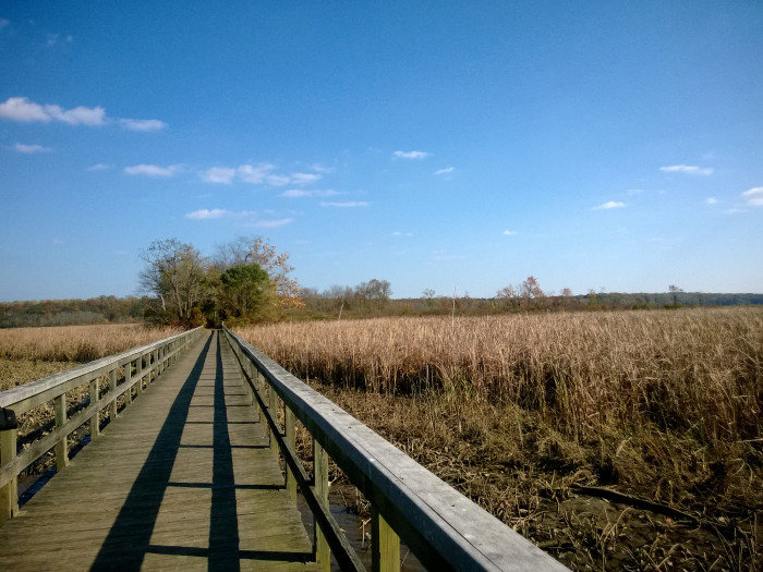 There are several boardwalks that lead you over marshes, open water, and to observation decks. This one is pretty neat...