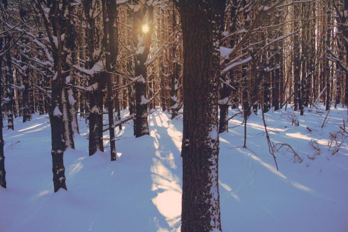 8. Snowy Mornings