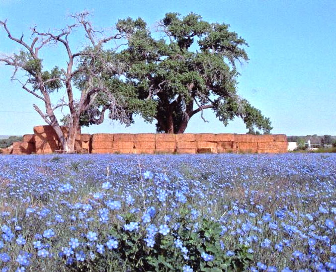 7. Wildflowers thrive in New Mexico.