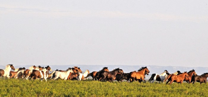 11. We have a wild horse sanctuary where you can see stunning views like this in real life.