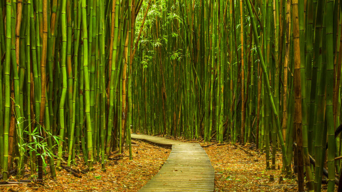 12. Hike through a bamboo forest.