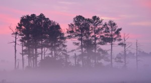 10 Eerie Shots in Delaware That Are Spine-Tingling Yet Magical