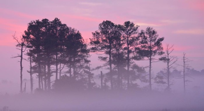 1. There's just something about the black shadows of the pines against the pink and purple hues of the sky in this photo from southern Delaware.