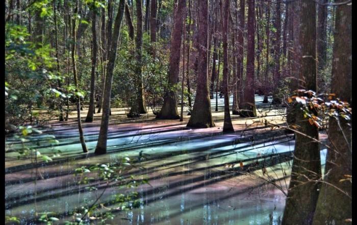 1. Florida's Psychedelic Swamp