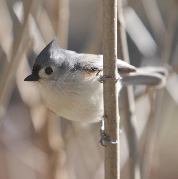 7. Bird watching