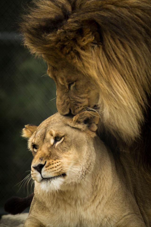 9. Lee Richardson Zoo (Garden City)