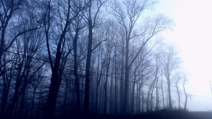 5. Straight out of a scene from a horror film, driving along a back road beneath these trees would give us the willies!