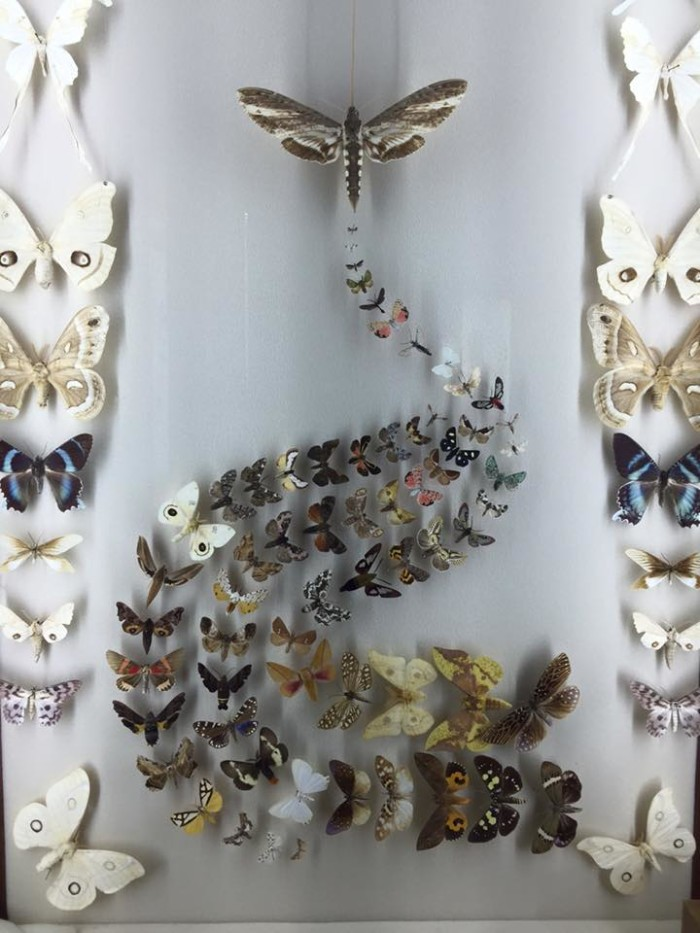 7. New Orleans is home to the largest bug museum in the United States, the Audubon Insectarium.