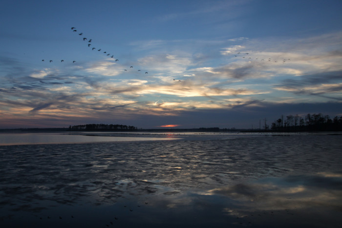 1. Blackwater National Wildlife Refuge